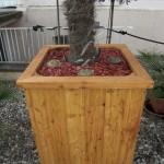 Winterharte Palme im Pflanzenkübel