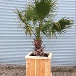 Pflanzkübel für Palmen und Olivenbäume
