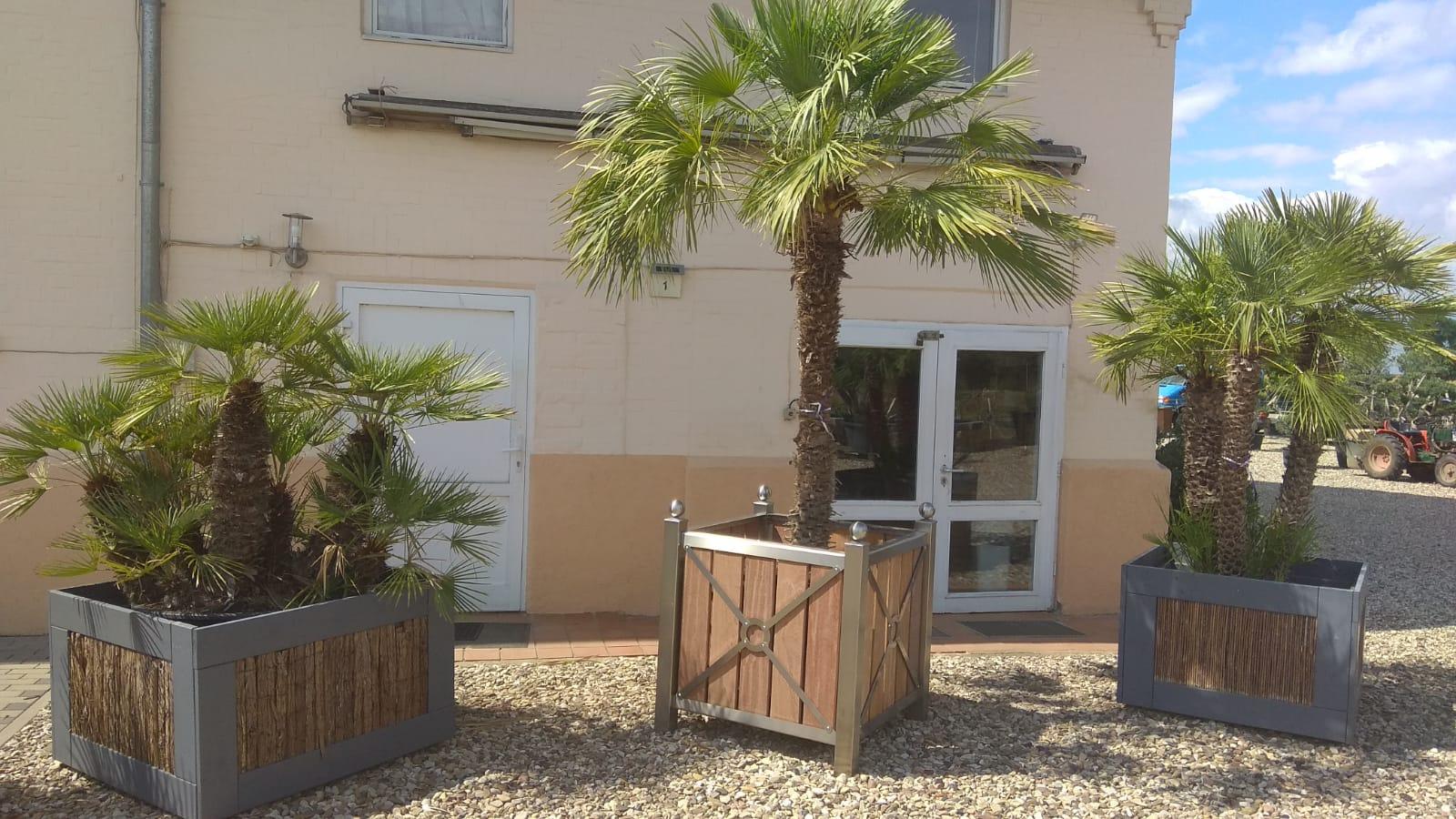Beheizte Pflanzkübel mit großen Palmen